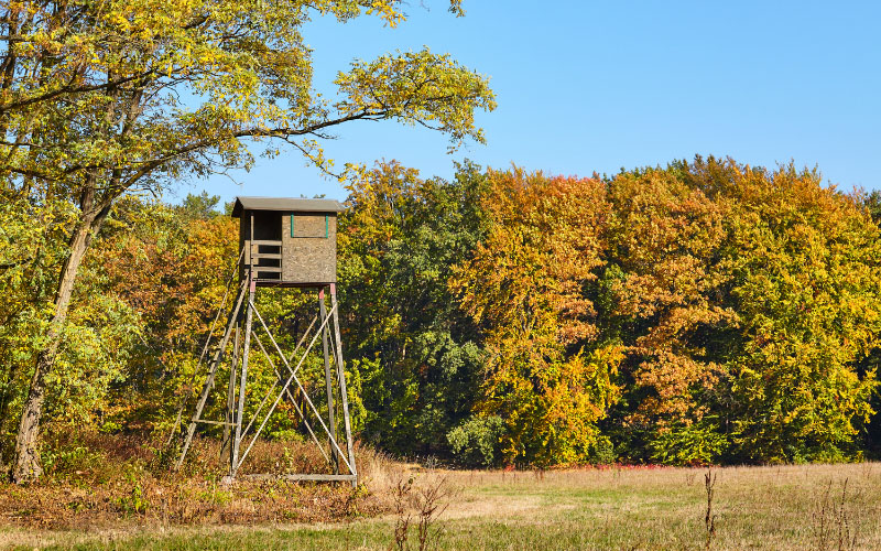 Deer Blinds Set Up Among the Fall Colors of Trees